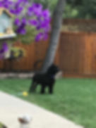Dex in the back yard.jpg