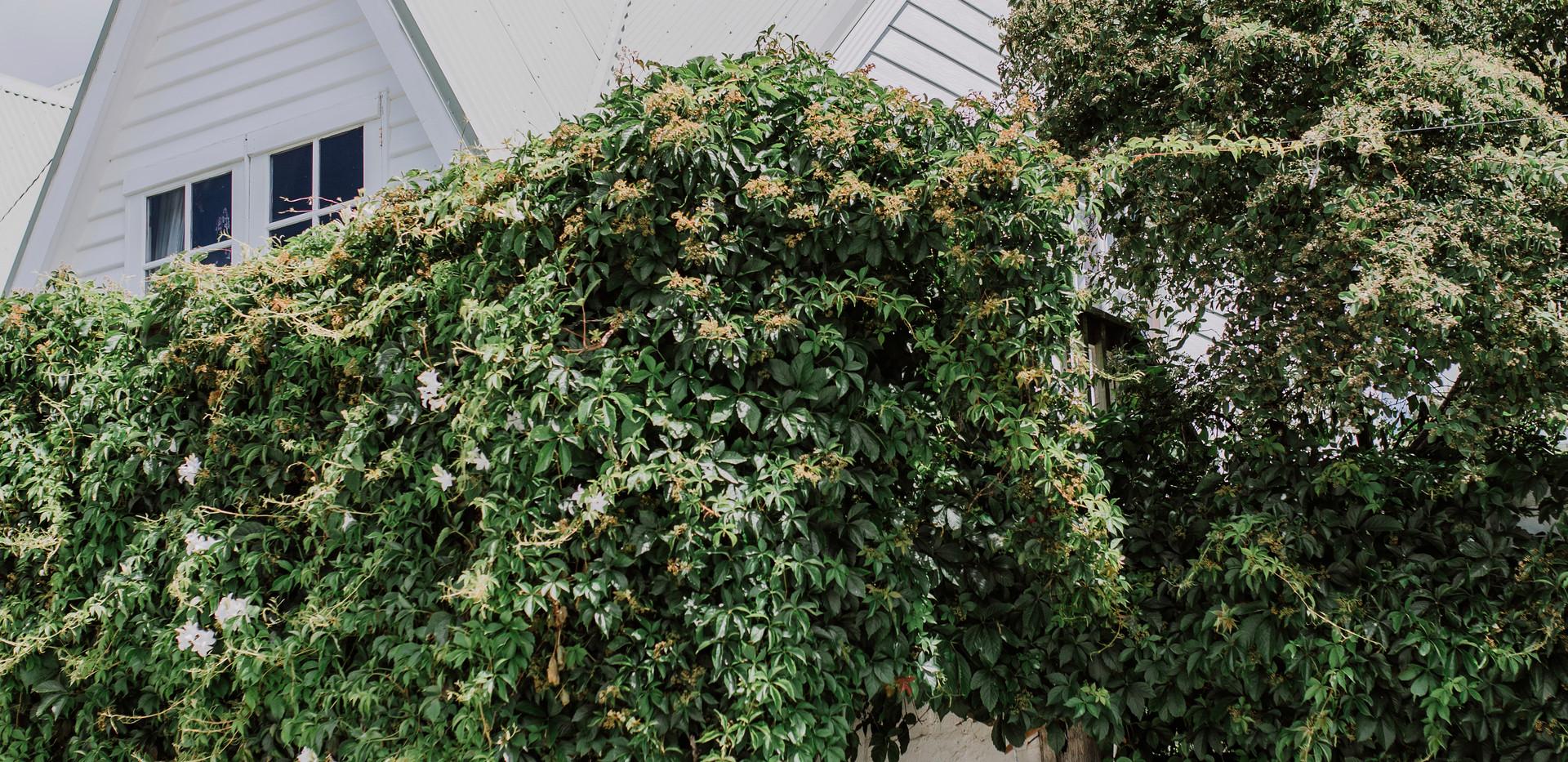 Rustic dress in Ivy