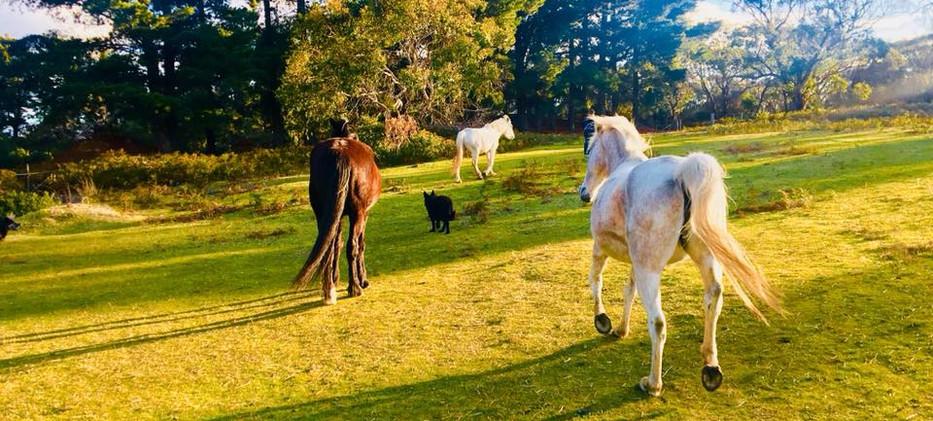 Horses at Hawley House