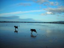 Dogs at Hawley Beach