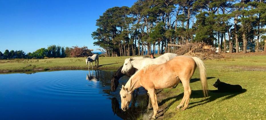 Horses farm stay