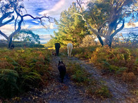 Bushland view