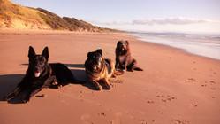 Hawley Dog beach