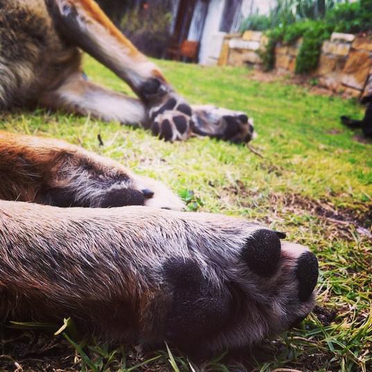 dog accommodation