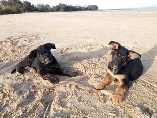 Dogs at Hawley