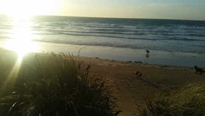 Hawley Beach dog beach