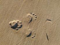 tasmanian devil foot prints