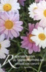 Lucille T flowers.jpg