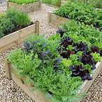 garden frame2.jpg