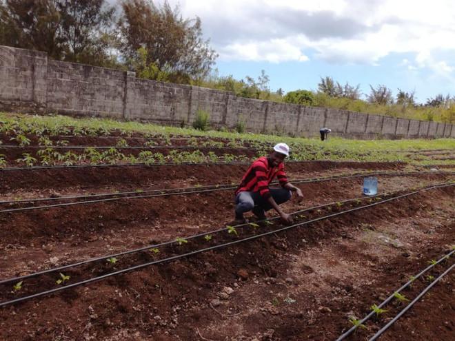 Vegetable & Fruits Farm