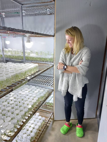 Visit of the banana tissue culture