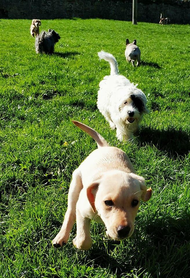 dog-day-care-centre-Dunbar
