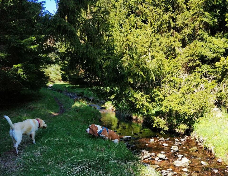 Star-Walkies-Doggie-Day-Care-Dunbar
