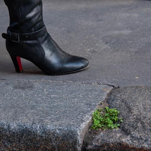 Nature au coin de la rue