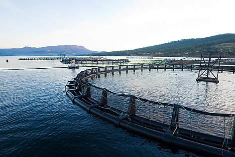 Seafarm Systems