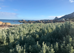 Quoin Flinders Island