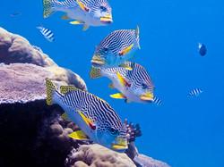 Tourism Tropical North Queensland