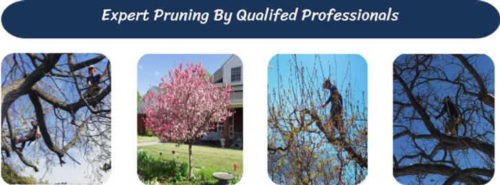 Pruning_page_header_2.png
