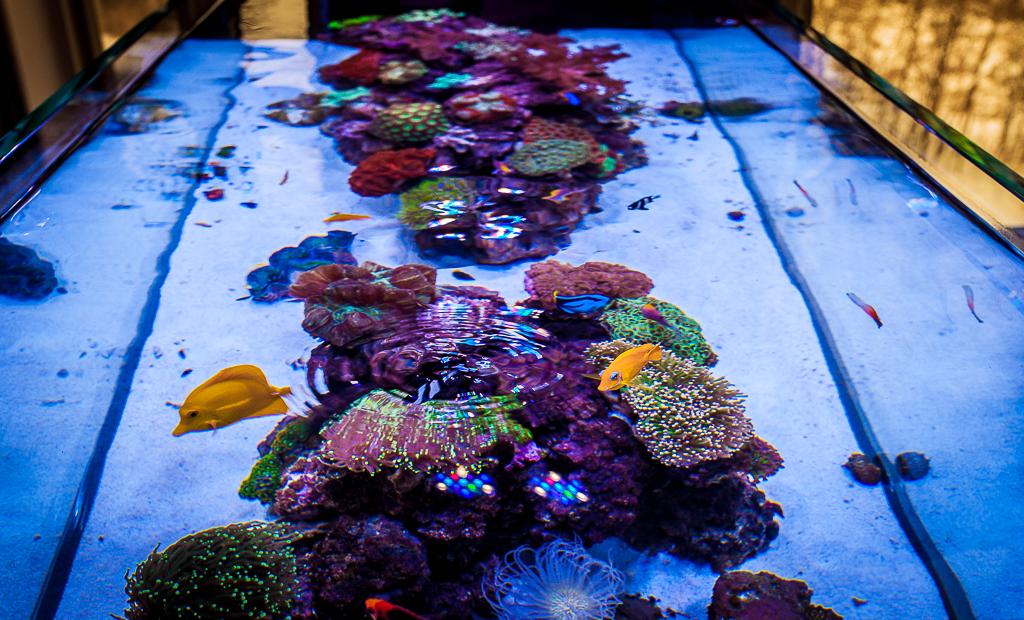 Custom Peninsula Reef Aquarium