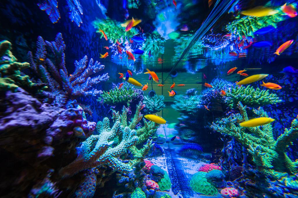 Custom 300 Gallon Glass Aquarium