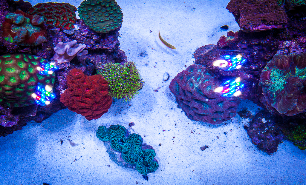 Custom Reef Aquarium