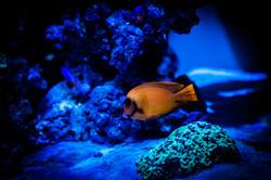 Custom Reef Aquarium