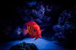 Custom Live Coral Reef Aquarium