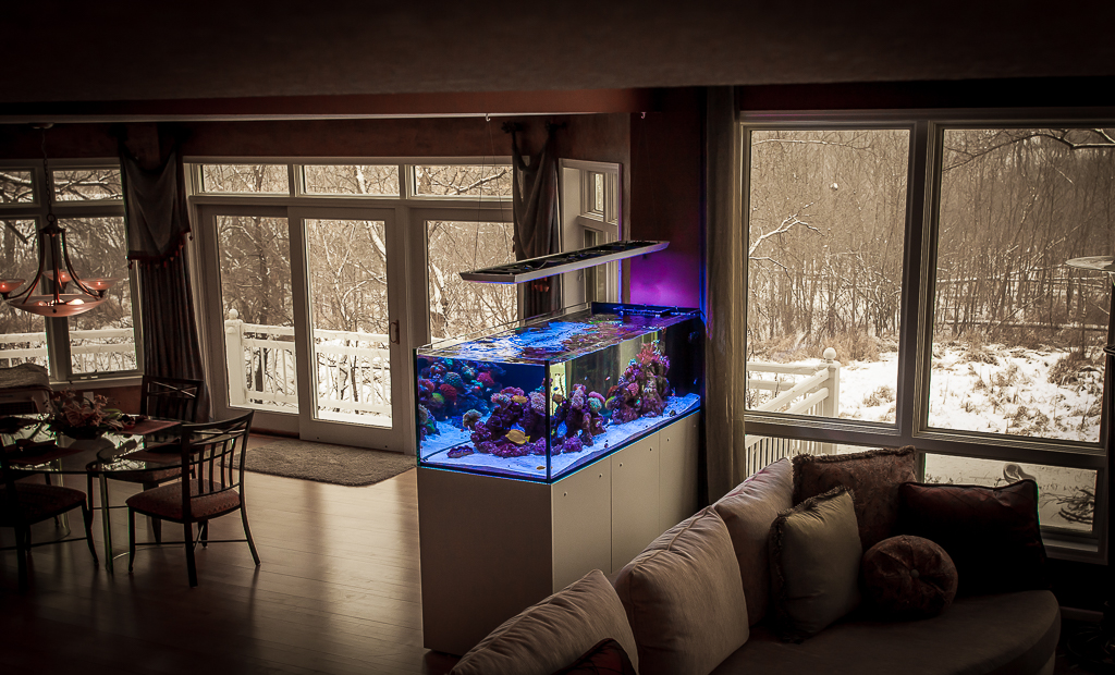 Custom Peninsula Reef Aquarium