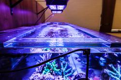 Custom Aquarium Details