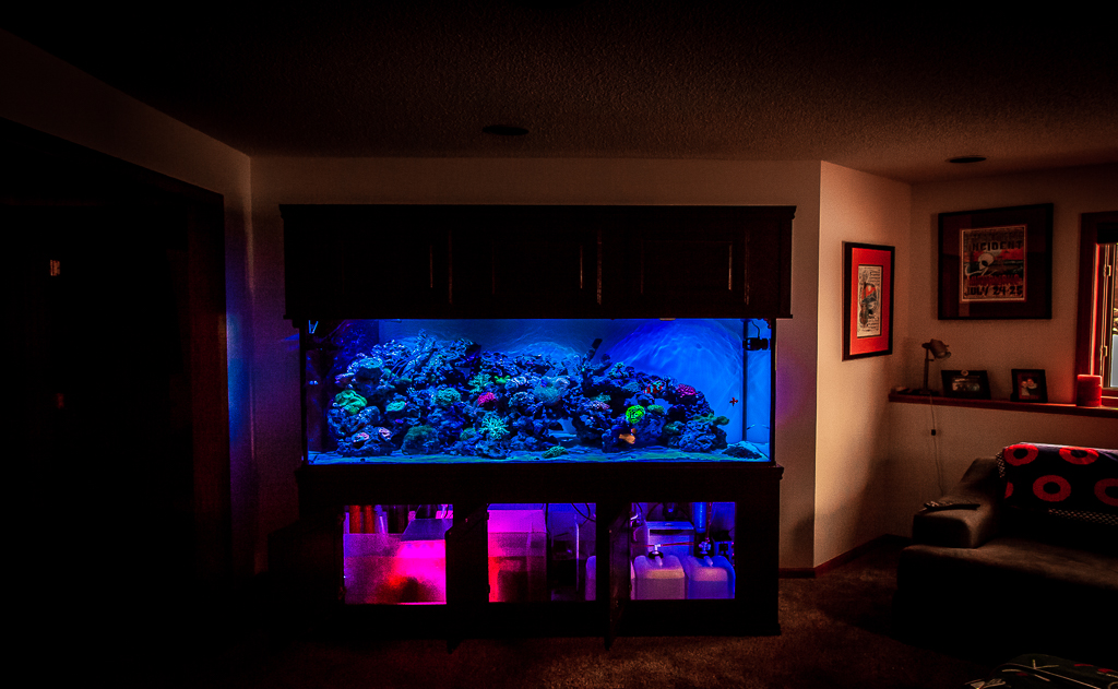 Custom 250 Gallon Reef Aquarium