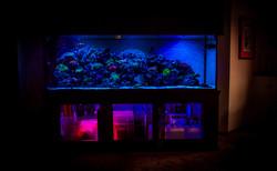 Custom 250 Gallon Reef Aquarium