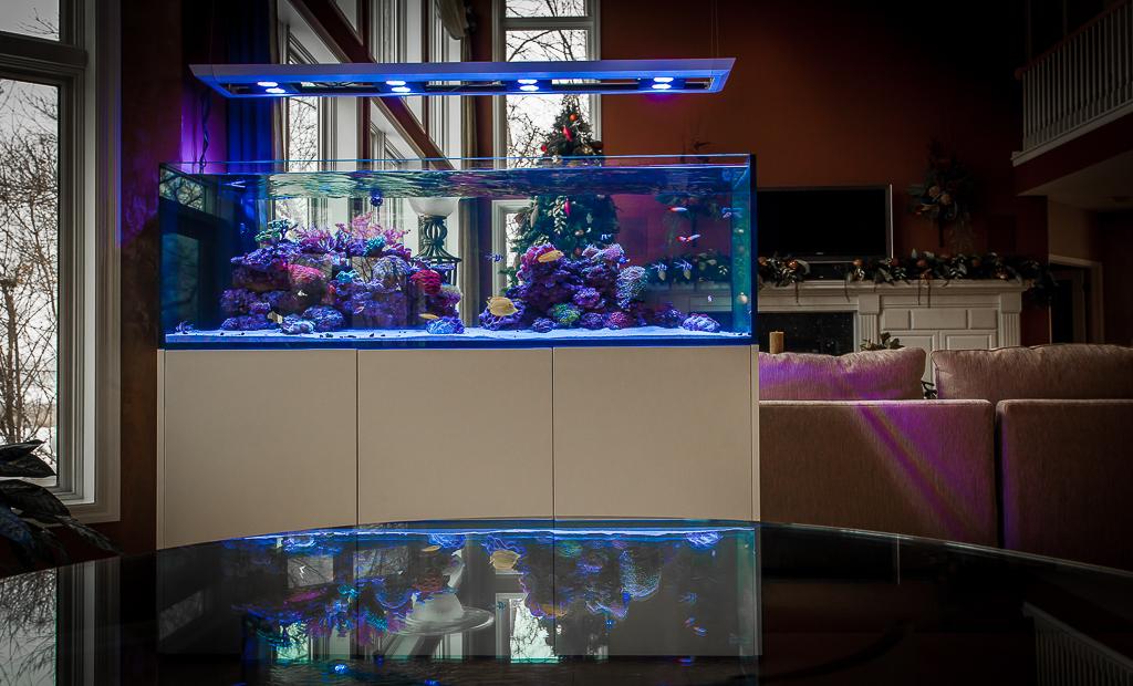 Custom Saltwater Reef Aquarium