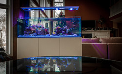 Custom Saltwater Reef Aquarium