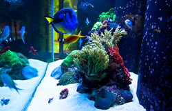 120 Gallon Soft Coral Reef