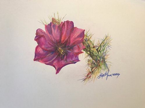 magenta cactus flower colored pencil drawing by Lindy Cook Severns