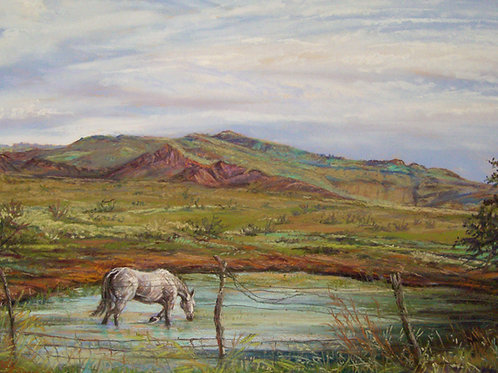 a white horse wades in a ranch tank Davis Mts landscape by Lindy Cook Severns