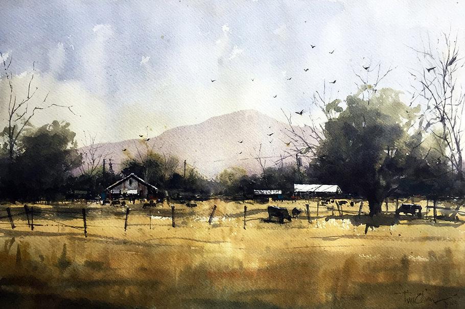 cattle grazing yellow pasture beneath mountain original watercolor tim oliver art