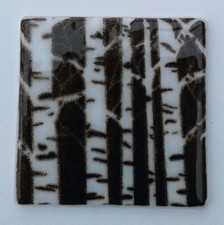 Silver Birch Trunks