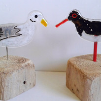 Seagull & Oyster catcher