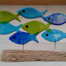Fish shoals (medium)