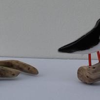 Oystercatchers on Driftwood