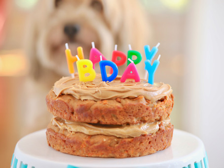 In the Kitchen with Kevin: Pup Friendly Birthday Cake!