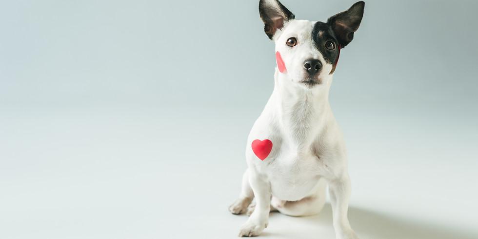 Valentine Pet Photos - Belfast