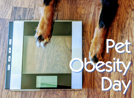Pet Obesity Day