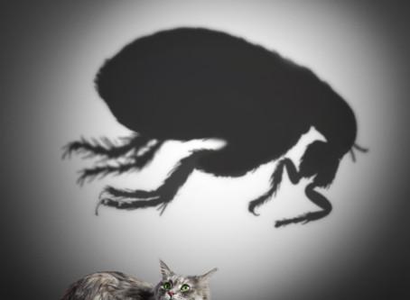 Fleas & Ticks: An Overview