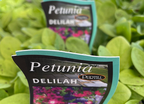 Petunia - Delilah Mix  punnet