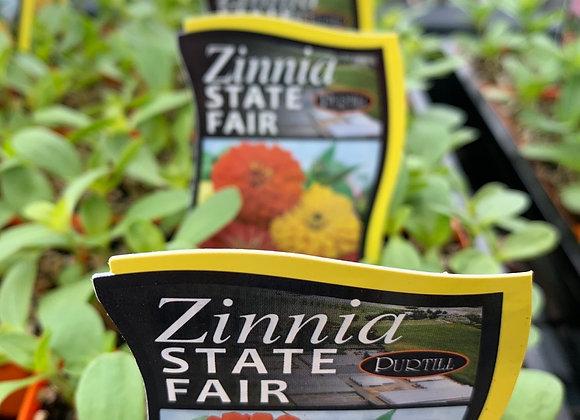 Zinnia - State Fair punnet