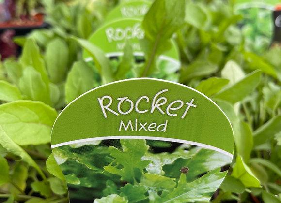 Rocket - Mixed