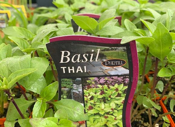 Basil - Thai punnet