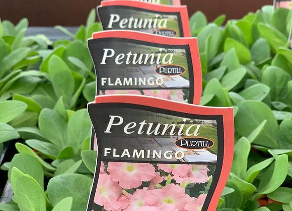 Petunia - Flamingo punnet